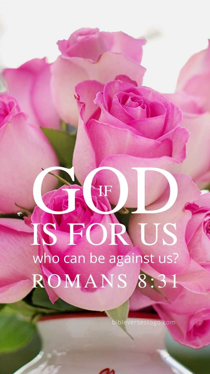 Christian Wallpaper - Pink Roses Romans 8:31