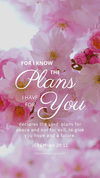 Christian Wallpaper - Pink Bloom Jeremiah 29:11