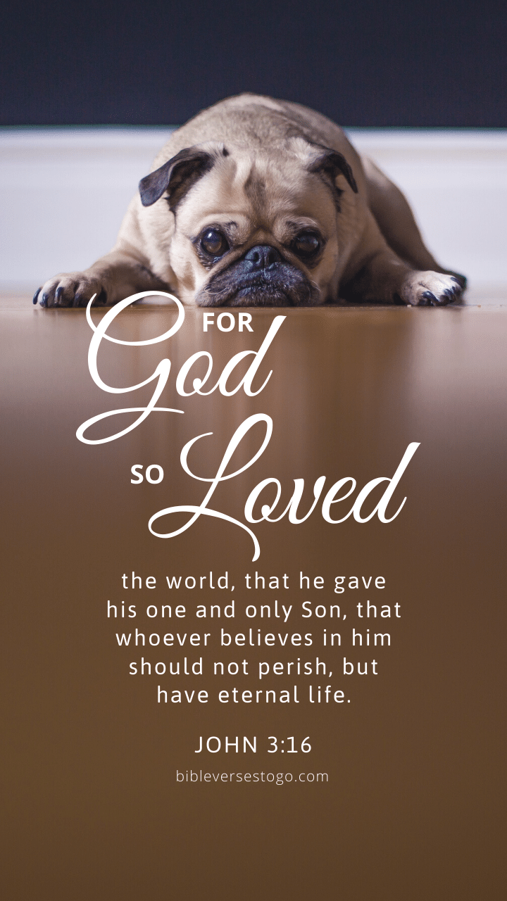 Christian Wallpaper - Pooped Pug John 3:16