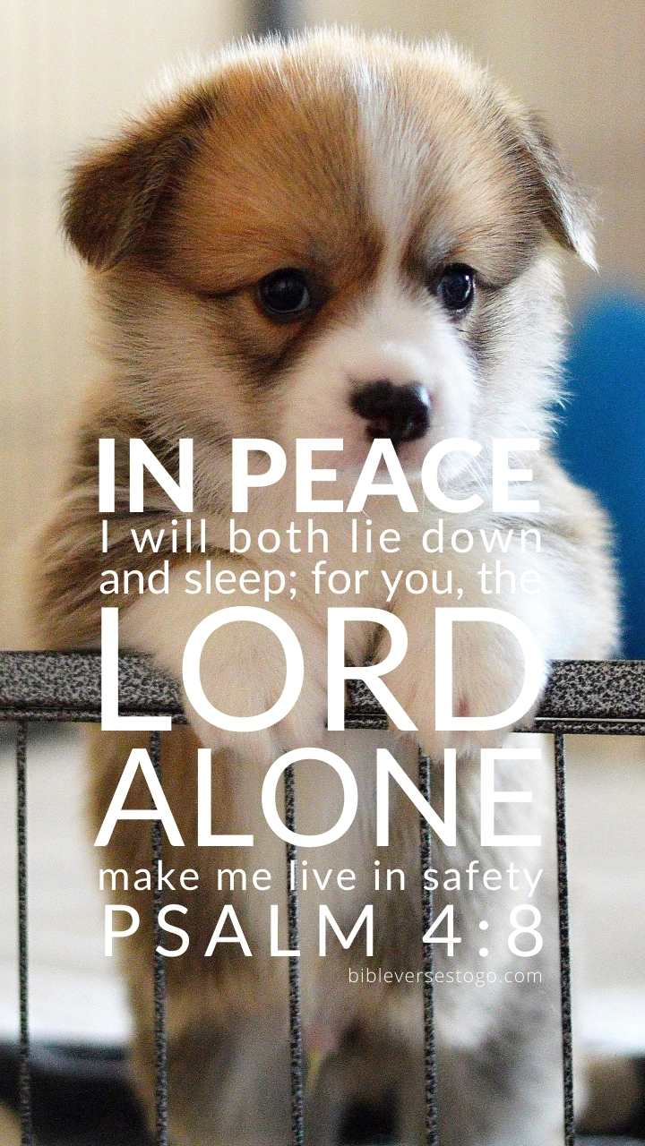 Christian Wallpaper - Puppy Psalm 4:8