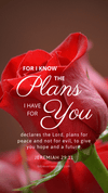 Christian Wallpaper – Red Rose Jeremiah 29:11