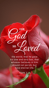 Christian Wallpaper – Red Rose John 3:16