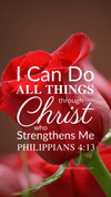 Christian Wallpaper – Red Rose Philippians 4:13