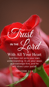 Christian Wallpaper – Red Rose Proverbs 3:5-6