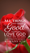 Christian Wallpaper – Red Rose Romans 8:28