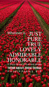 Christian Wallpaper - Red Tulips Philippians 4:8