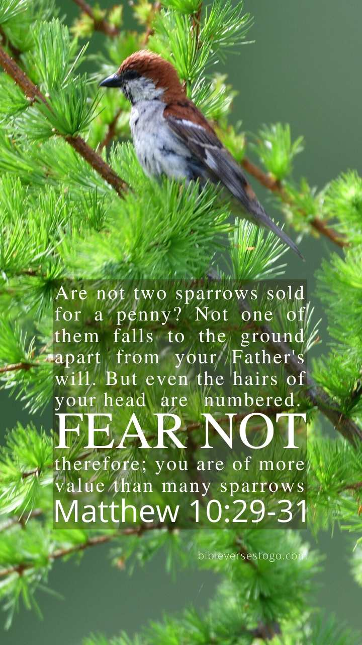 Christian Wallpaper - Sparrow Matthew 10:29-31