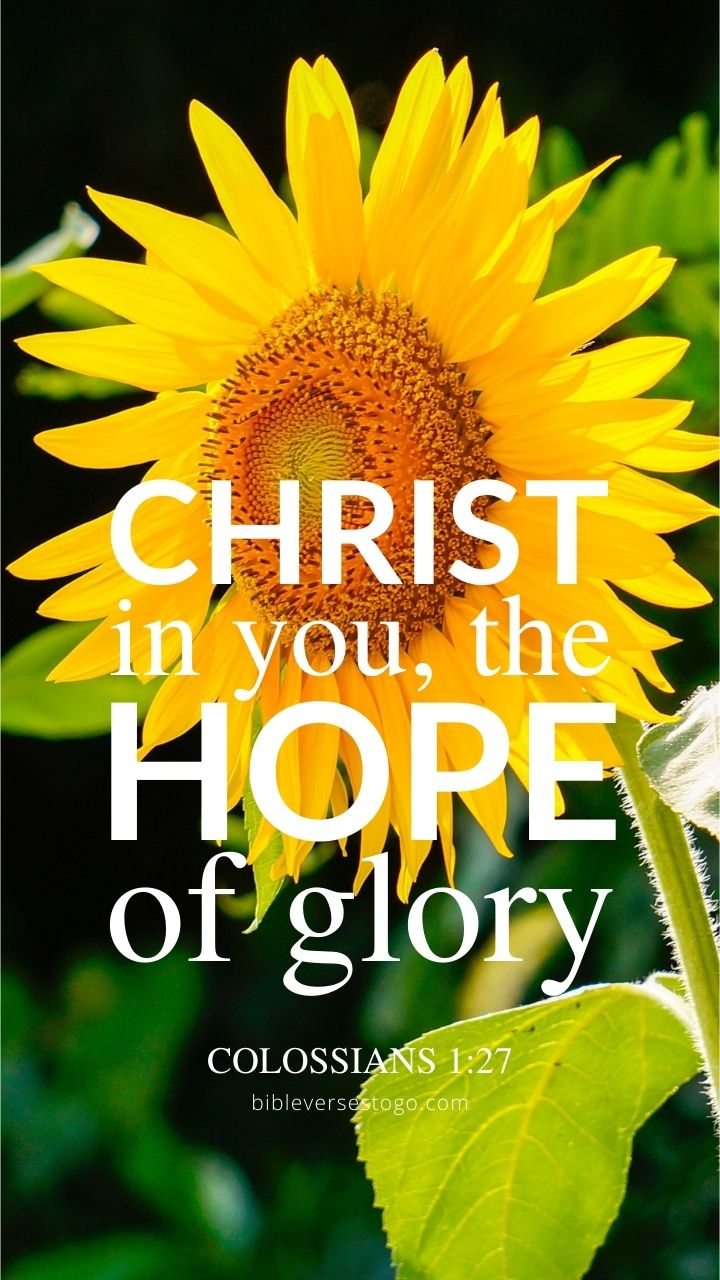 Christian Wallpaper - Sunflower Glory Colossians 1:27