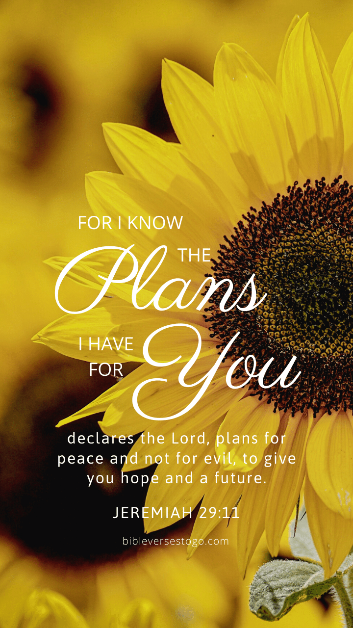 Christian Wallpaper - Sunflower Jeremiah 29:11