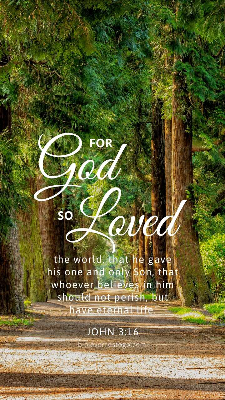 Christian Wallpaper – Treeline John 3:16