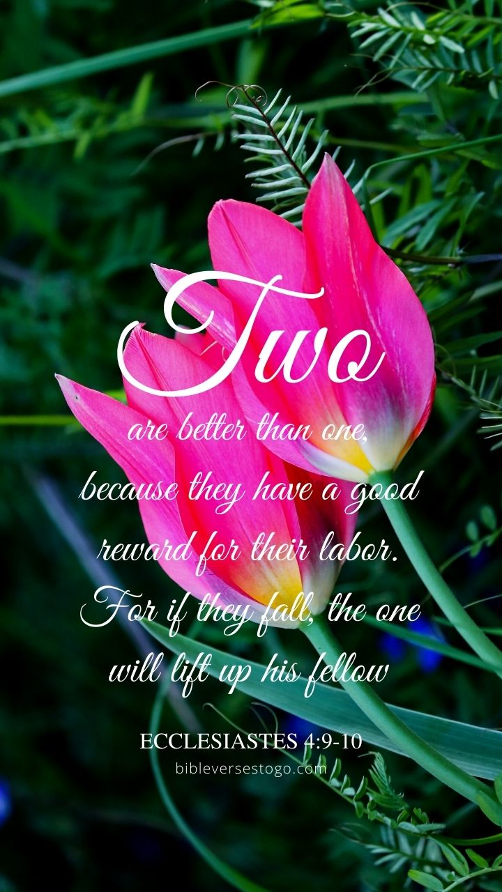 Christian Wallpaper - Two Tulips Ecclesiastes 4:9-10