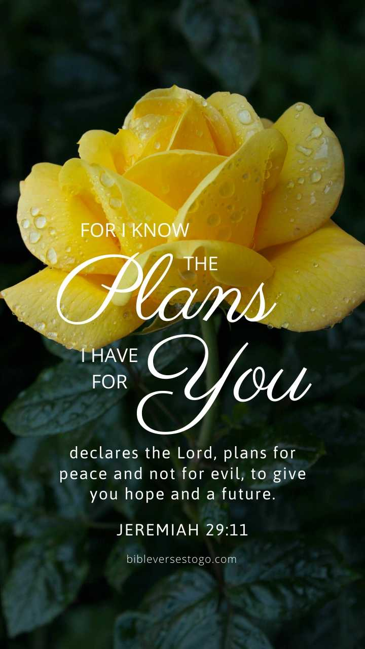 Christian Wallpaper – Yellow Rose Jeremiah 29:11
