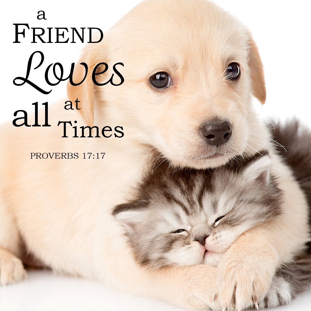 Proverbs 17:17 - A Friend Loves - Bible Verses To Go