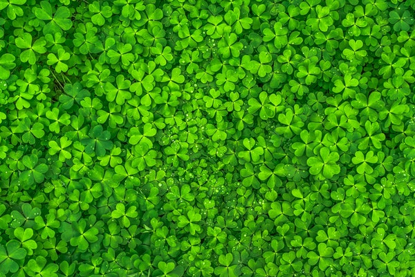 The Gift of Luck: St. Patrick's Day Gift Guide