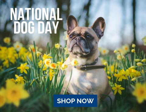 National Dog Day Gifts