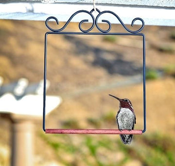 Dewdrop Barbershop Hummingbird Feeder