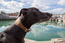 Load image into Gallery viewer, Earthbound Whippet Collar Small / Beige / Tweed & Leather Leather Whippet Collars