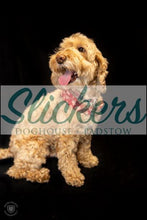 Load image into Gallery viewer, Slickers ◊ Doghouse t-shirt 120 Eddie T-shirt