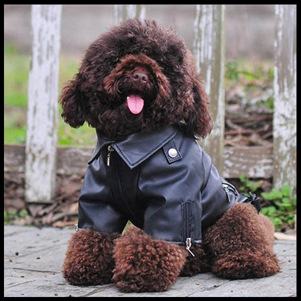 All sizes Biker Dog Jacket - 10 Sizes!