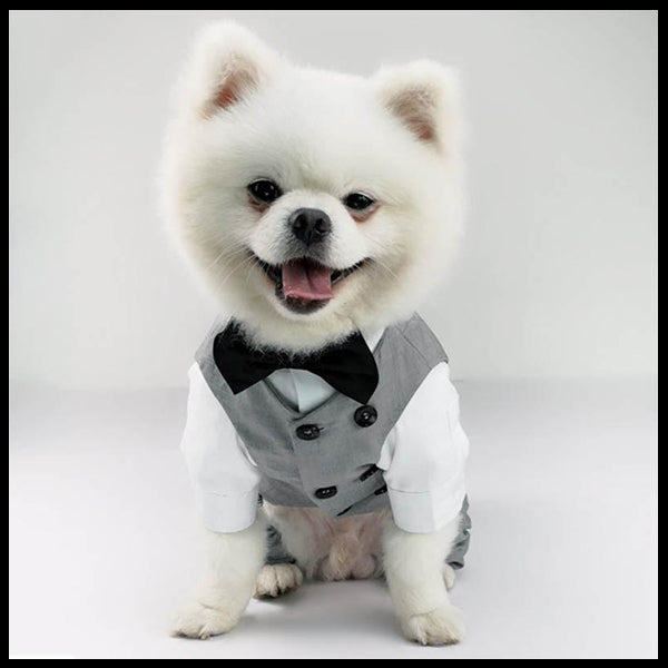 Grey Formal Dog Romper & Vest