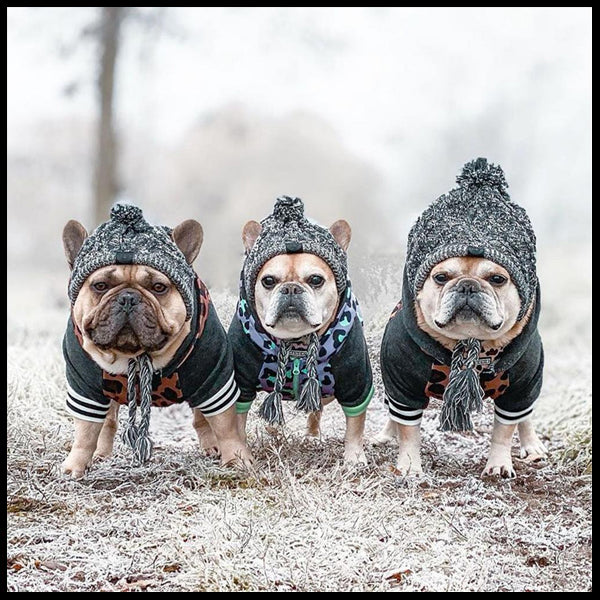 Knitted Warm Dog Beanies