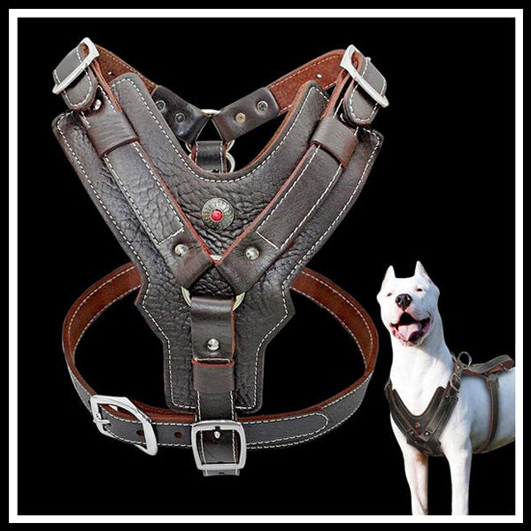 Genuine Leather Dark Brown Harness