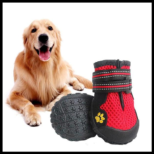 Outdoor Boots for Medium & Large Dogs