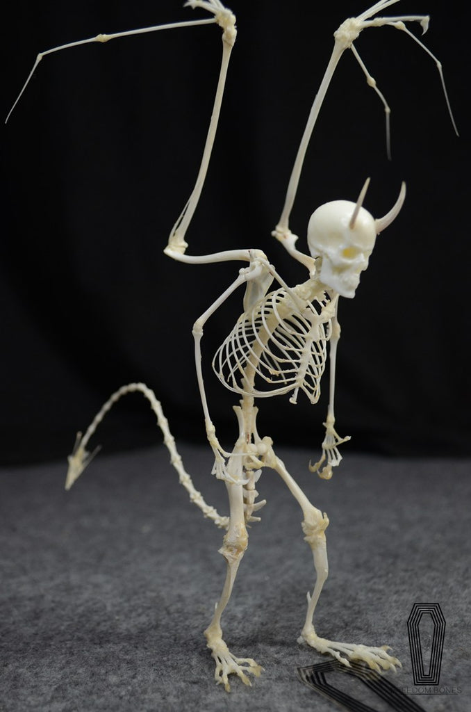 Devil Skeleton Skull