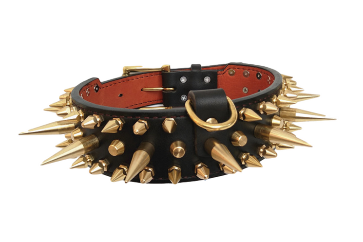 Golden Spikes Genuine Leather Dog Collar - Holy Buyble