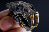 Saber-Tooth Skull Pendant - Holy Buyble