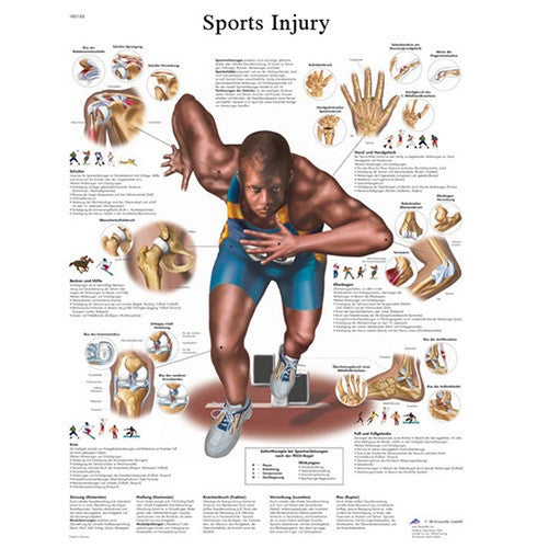 Anatomical Chart - Sports Injuries, Paper