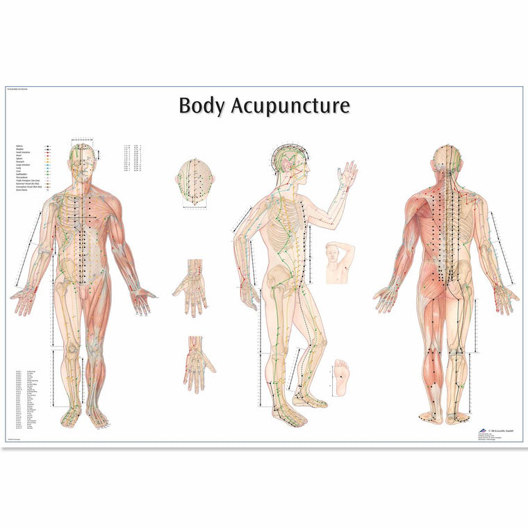 Body Acupuncture Anatomical Poster
