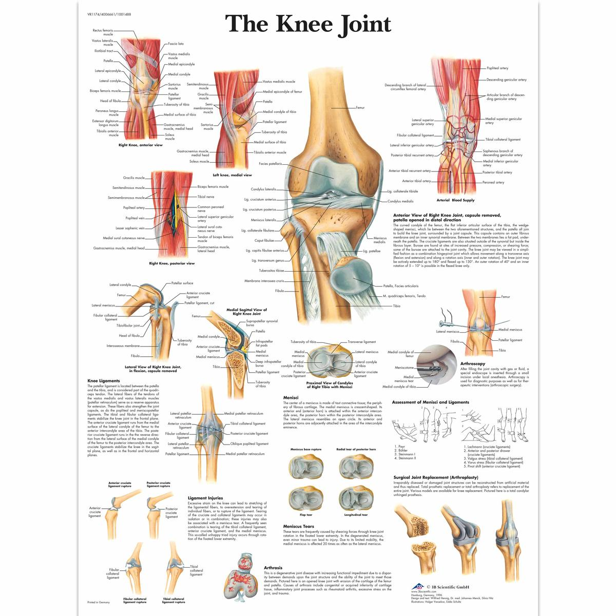 The knee joint anatomical chart ceilblue the knee joint anatomical chart ccuart