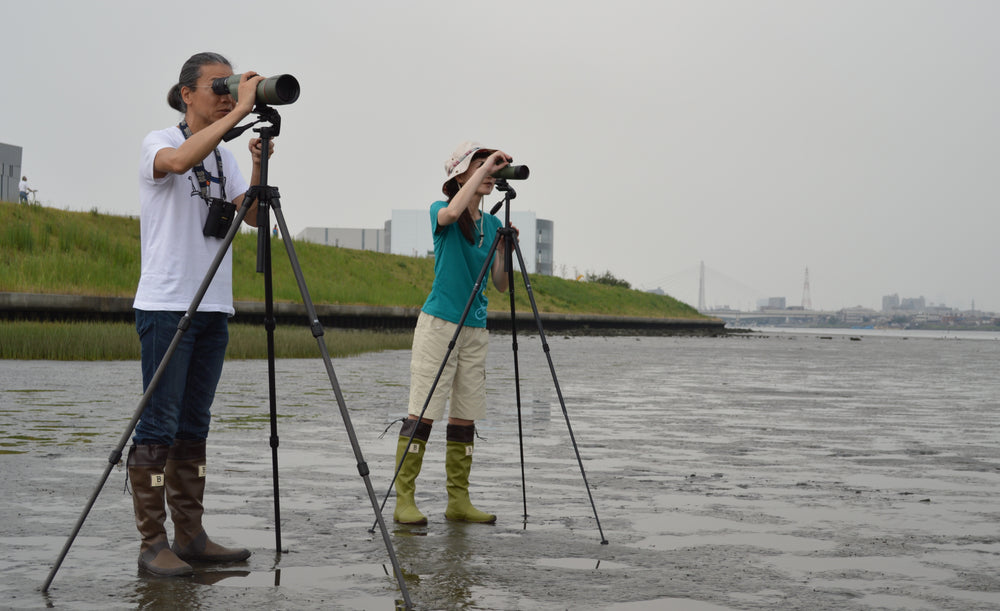 An unusual migration: The Wild Bird Society of Japan now at wagumi