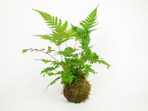 Load image into Gallery viewer, Fern