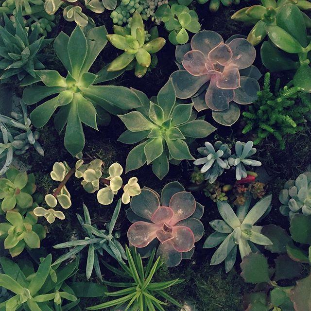 Load image into Gallery viewer, Succulent