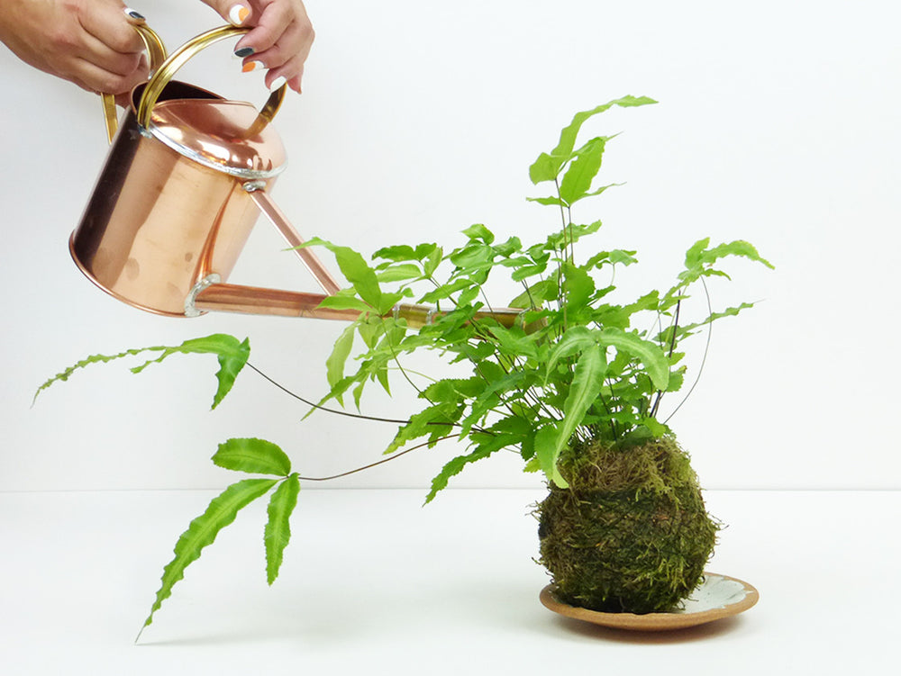 Load image into Gallery viewer, Bon Joro Watering can by Negishi Industry Co.