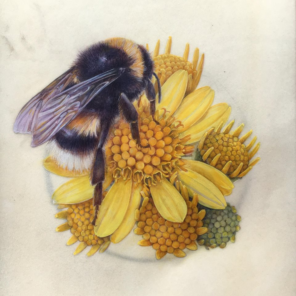 Shevaun Doherty Botanical Art