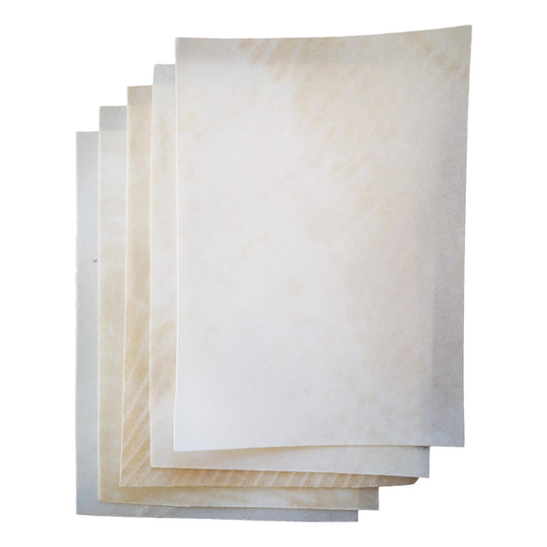 calfskin vellum for botanical art