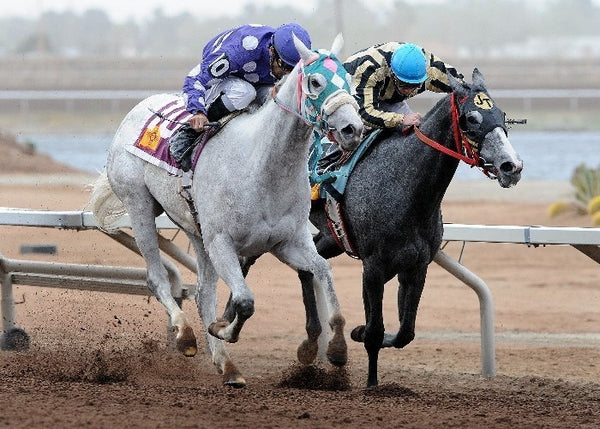 Oh My Ghost - New Mexico Breeders' Oaks