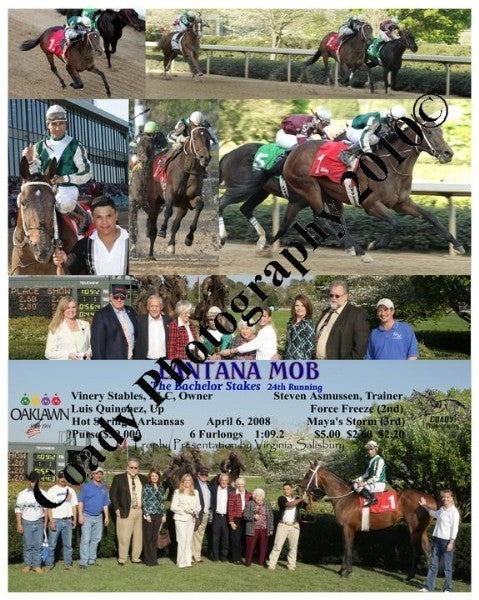 LANTANA MOB  -  The Bachelor Stakes  24th Running