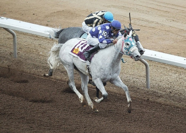 Oh My Ghost - New Mexico Breeders' Oaks - Aerial