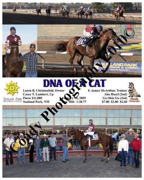 Dna of a Cat  -    -  1 18 2009