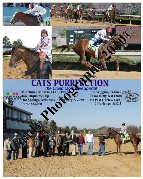 CATS PURRFECTION  -  The Grand Lagniappe Special