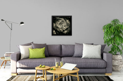 Black & White Rose - Framed Art Print