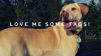 Love me some tags! Red Dingo pet ID tags review