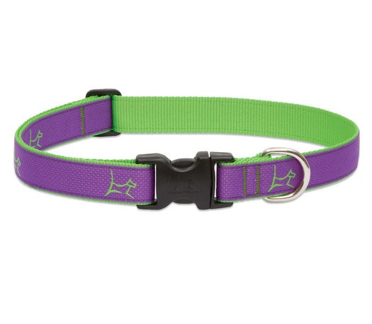 Lupine - Hampton-Purple Club Collar | Krazy For Pets