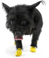 PawZ - PawZ Disposable Dog Boots, XX-Small | Krazy For Pets