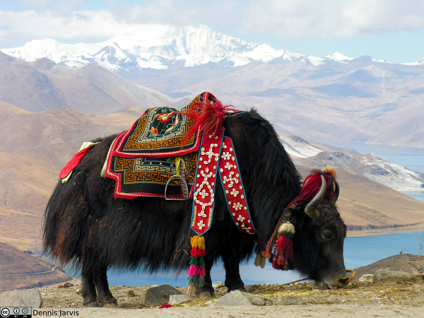 Know Your Fiber:  Yak