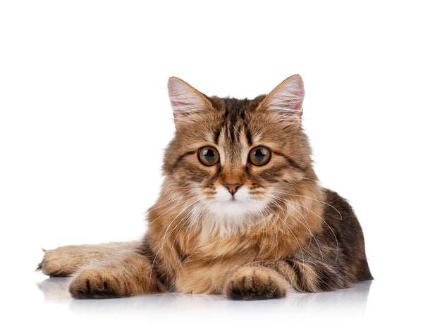 35 Surprising Facts About Cats
